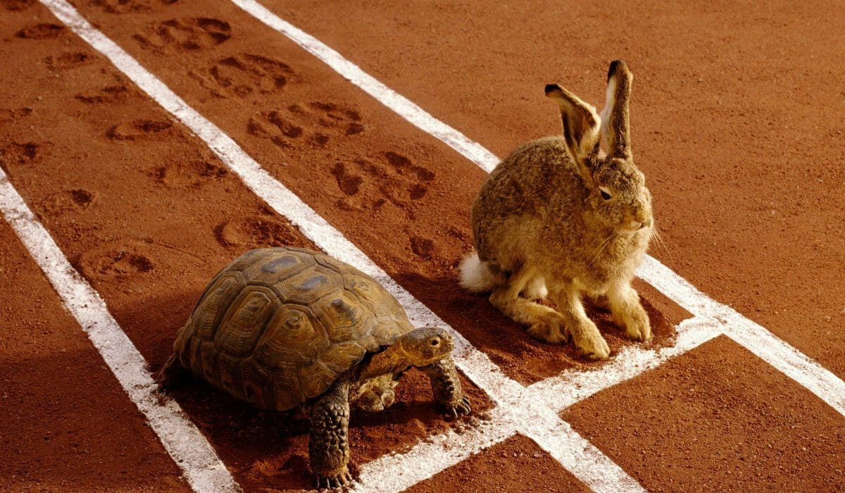 tortoise-and-the-hare