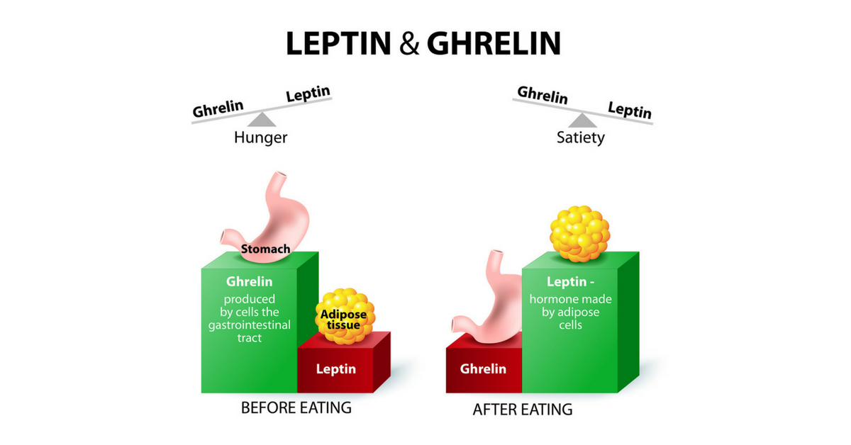 Ghrelin-and-Leptin-Resized