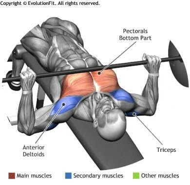 bench-compound-lift-anatomy